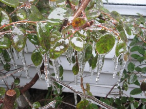 Many plants are frost tolerant.