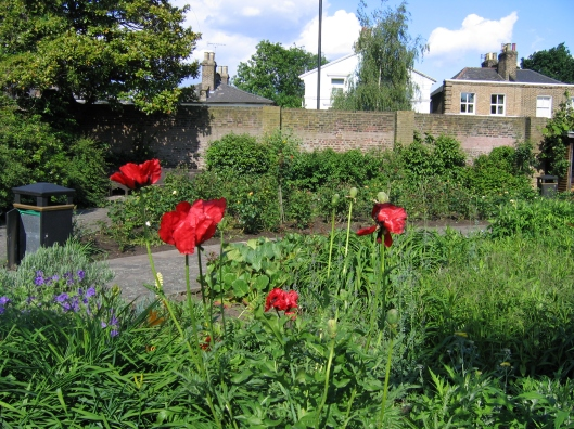 Beautiful red poppies!