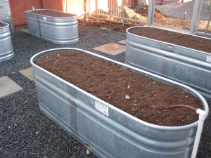 Here is a watering trough turned into a raised bed for vegetables. Each bed has it's own water valve so it can be turned of when not in use.