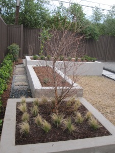 Triple rasied beds with River birch and Mexican feather grass in low bed, second bed is for herbs and third bed has a hedge of little Gem Boxwood with room behind for planting vegetables and there is a lemon bush in the corner.