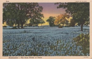 An old postcard of Texas Bluebonnets.