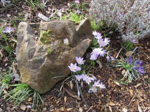 Oregon Garden Silverton Oregon
