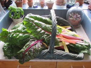 Swiss card fresh from the garden and ready to steam.