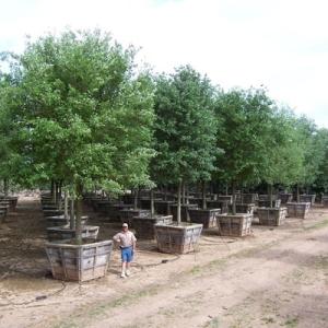 Glean Flora Farms