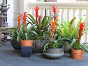 I love the bright orange flowers of these bromeliad and the cluster of pots on the front porch invites you to the front door.