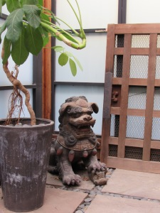Female Foo dog gardening the orchid house.
