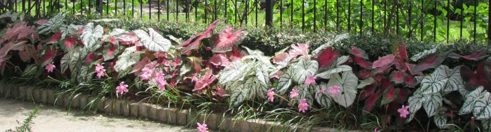 Ravenscourt Gardens