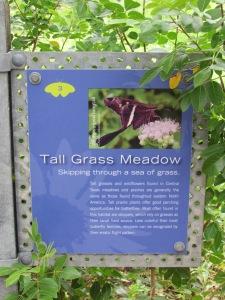 Tall Grass Meadow at Lady Bird Johnson's Wildflower Center