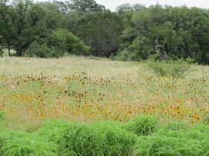 Path to the meadow at LBJ Wildflower Center