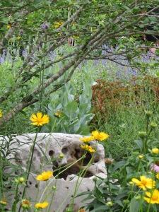 A little naturalistic spot in the butterfly garden.