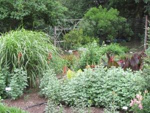 Butterfly garden at Natural Gardener in Austin