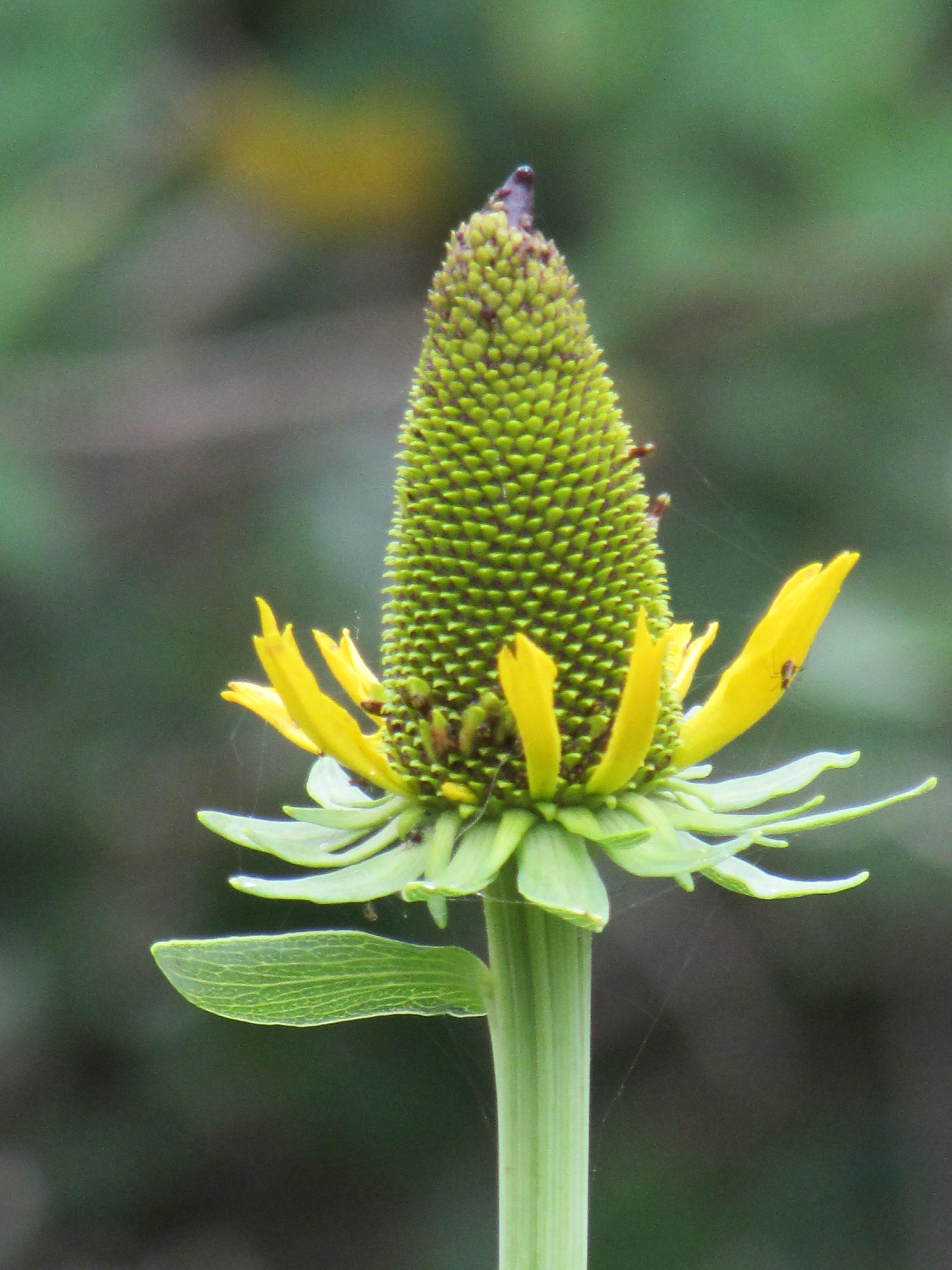 Flower At Butterfly Garden At Natural Gardener In Austin