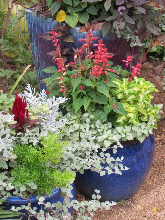 Beautifully planted container gardens
