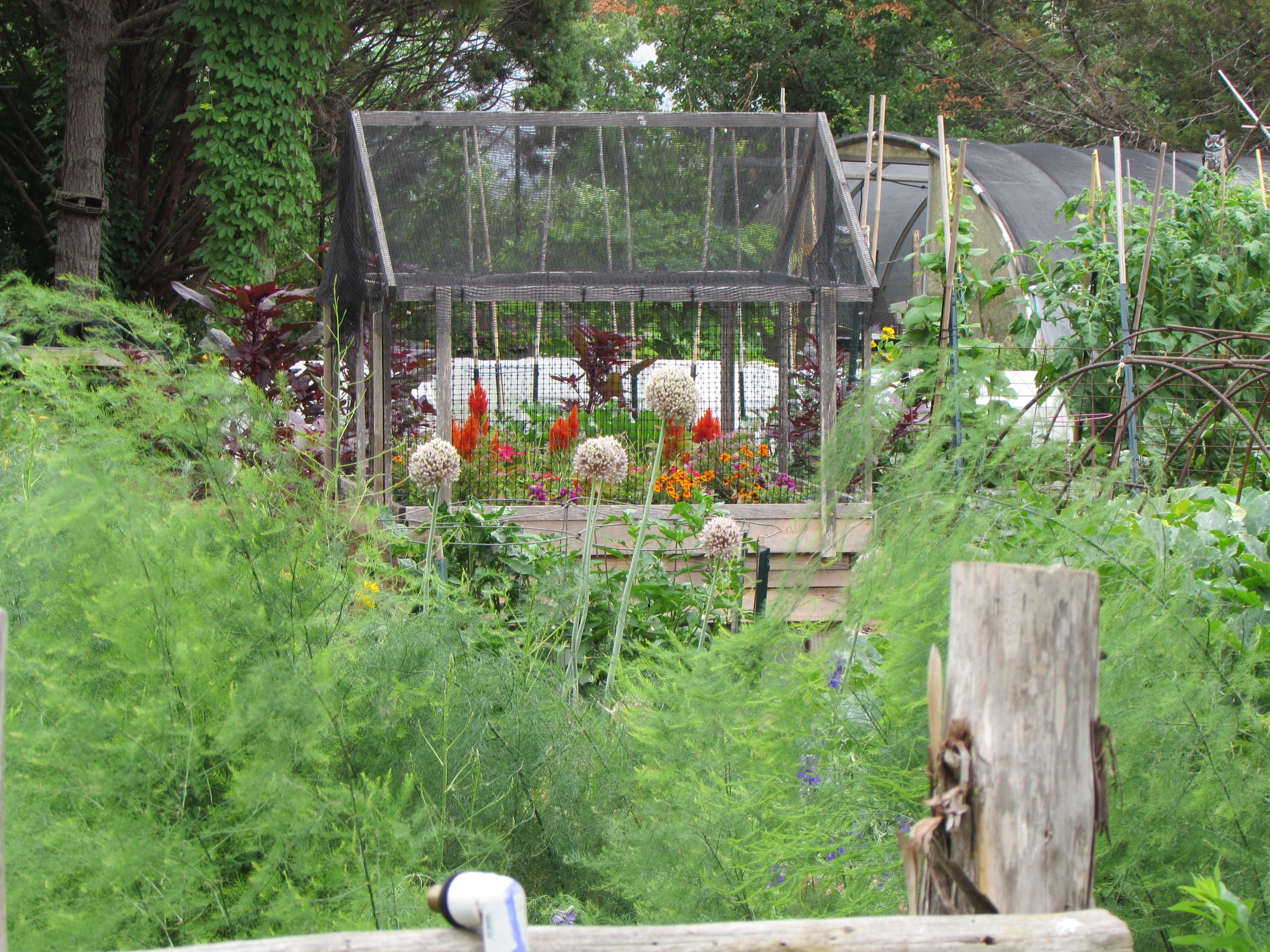 Elegant Veggie Garden At The Natural Gardener ...