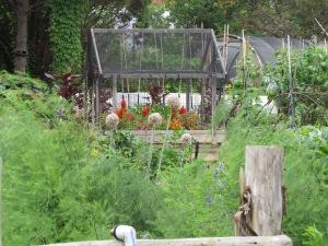 veggie garden at the Natural Gardener