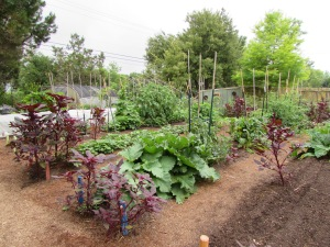 veggie garden at the Natural Gardener