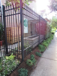View throught the fence. We left the existing crape myrtle in the corner and under-planted it with low maintenance white trailing lantana.
