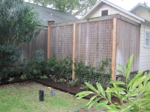 Welded wire trellis with vines to increase the privacy for the tenant in the rental cottage.