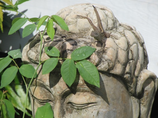 By Buddha statue sitting at the head of my holding area enjoying nature and nature in joying him.