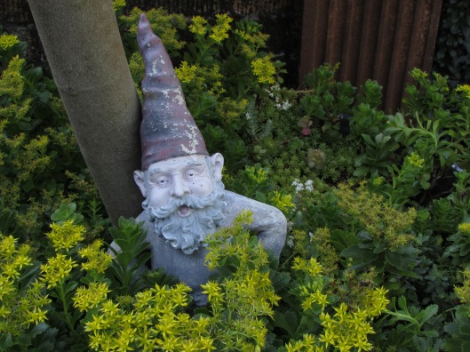 A sleepy gnome hiding in the sedum at JJ De Sousa Gardens