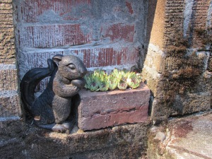 Little squirrel with his garden at JJ De Sousa's garden.