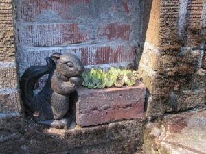 Little squirrel with his garden at JJ De Sousa's garden.