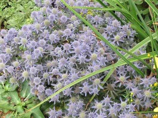 Lovely little plant (forgot the name : ) at Linda Ernst Gardens