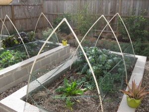 The oweners added netting to keep the birds and bugs out of there veggies.