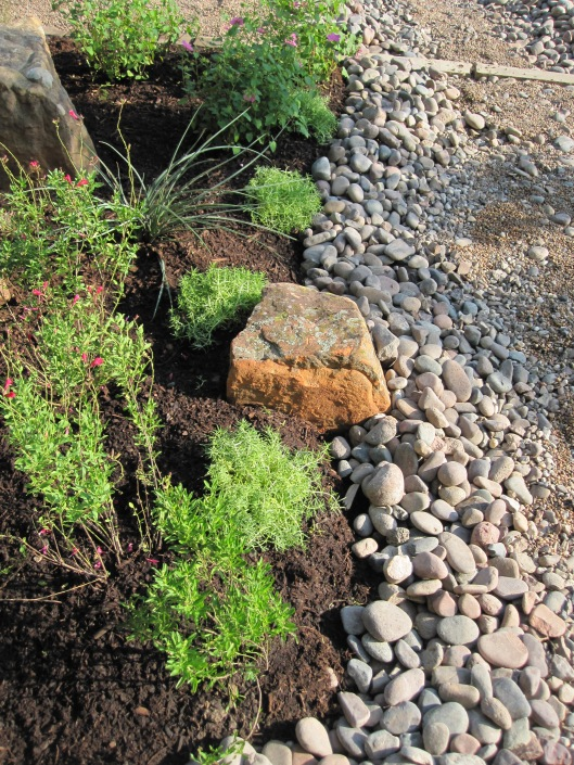 To the right of the river bed wash we have red Salvia greggi, Mexican sedum and a Red yucca.