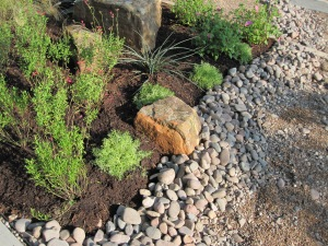 When the Mexican sedum fills in it will cascade over the edge of the rocks.