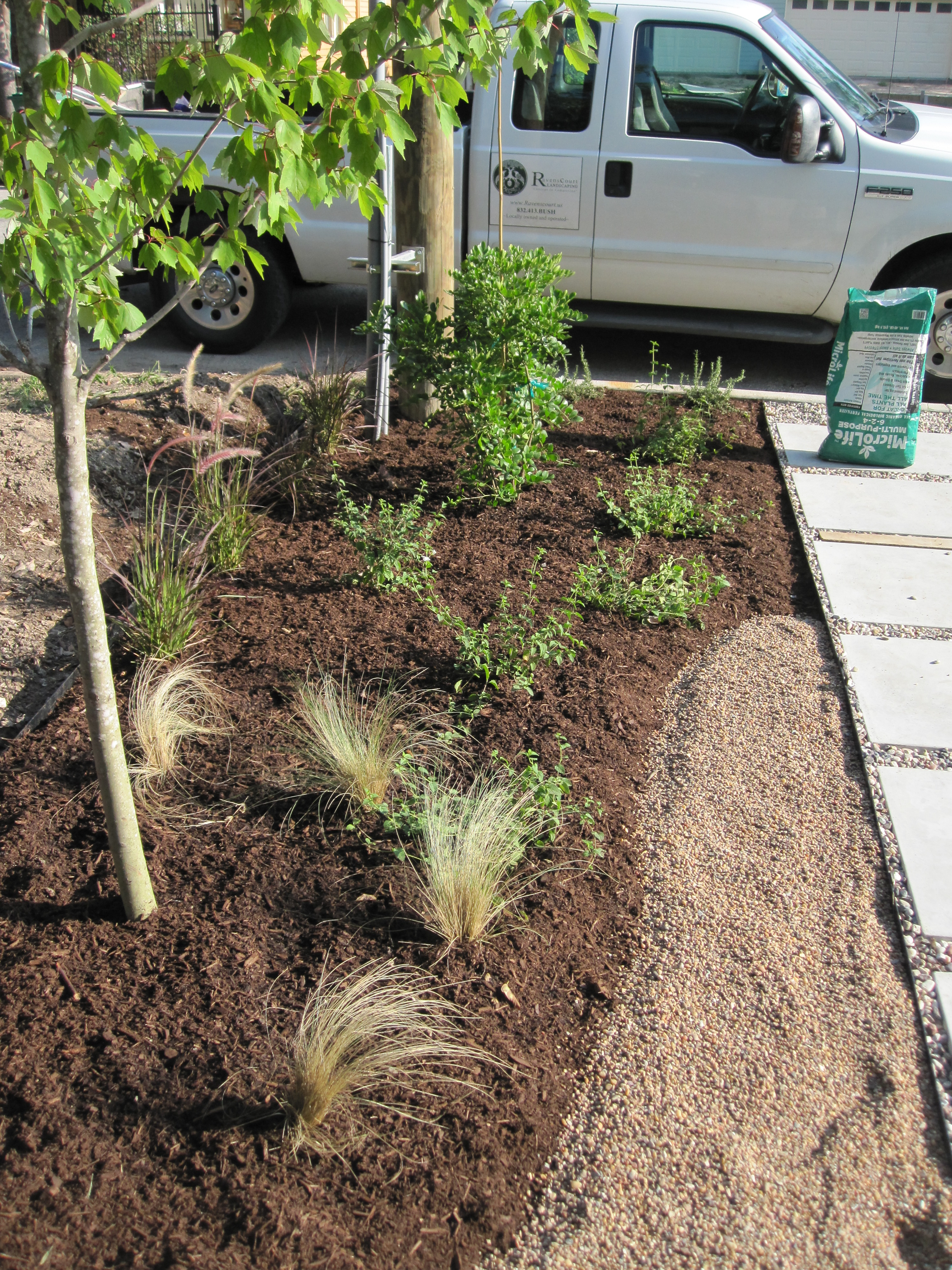 From Weeds to No-Mow Austin Style Garden – Part 2 (The Plants ...