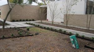 Raised bed with crape myrtles.