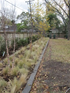 Wax myrtle privacy hedge against fence
