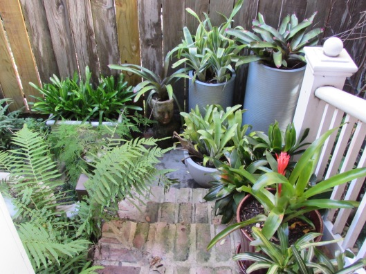Bromeliad corner at Ravenscourt