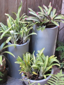 New galvanize containers for the bromeliads