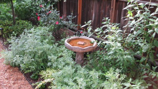 This is in the same garden as above. It is a second water source.