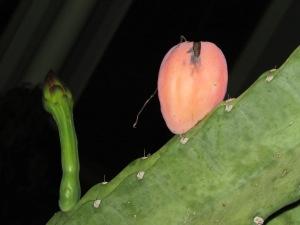 Seed pod.