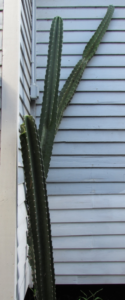 And just this morning when I went to take a picture of the whole cacti I found it is missing an arm.