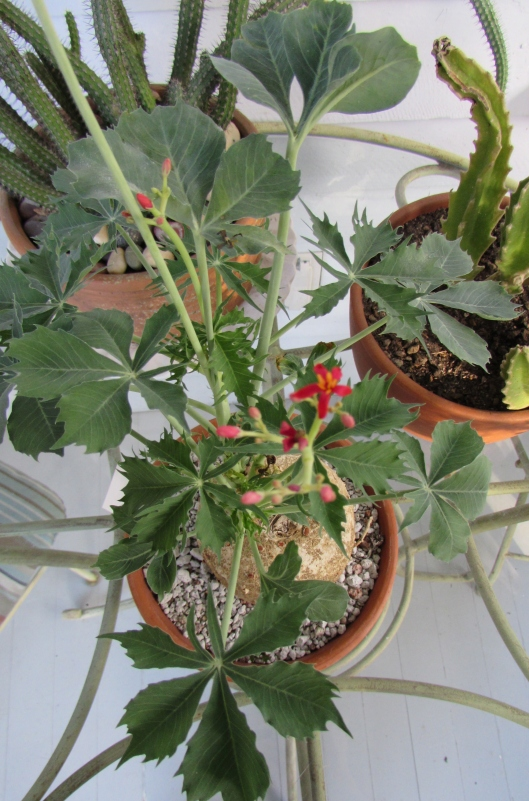 Top down view to see the leaves better.