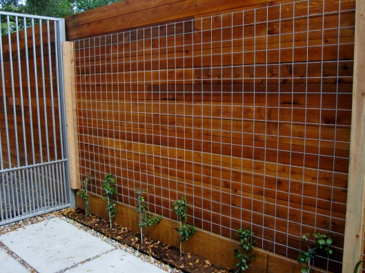 Welded wire cattle panels as a trellis for vines.