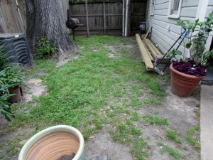 BEFORE, an aging oak and patchy grass.