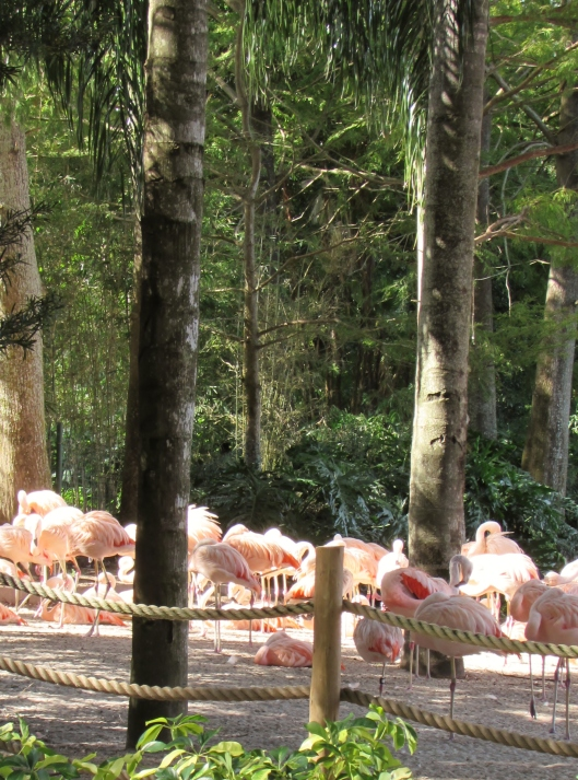 We also saw live animals, like these lovely peach flamingos!