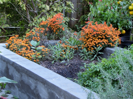 Our raised cinder block veg and herb bed.