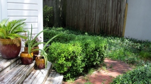Before, boxwoods, redbrick and Asian jasmine.