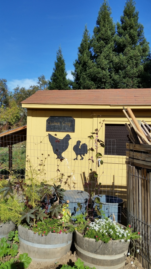 Chicken house at Quivira Vineyard