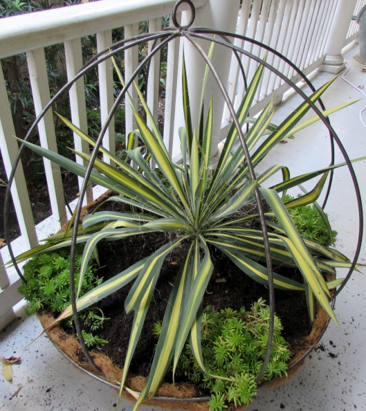 metal basket planter