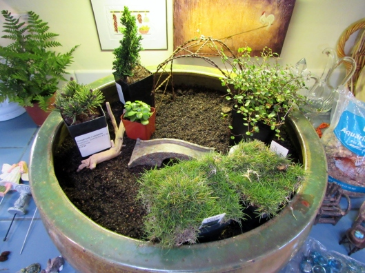 plants for fairy garden