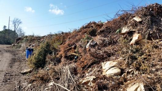 green waste from suburban neighorhoods