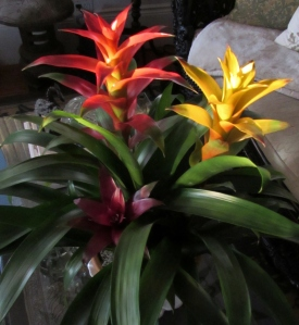 3 color bromeliad