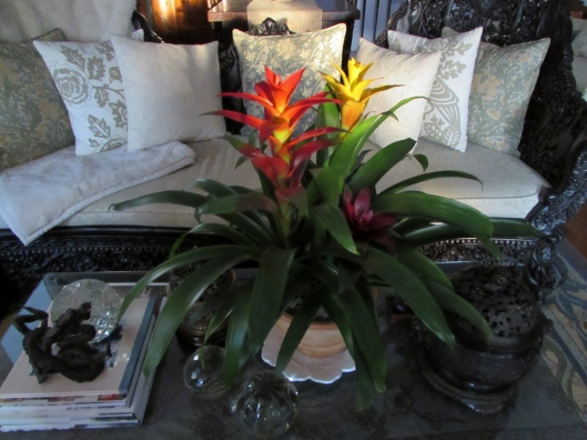 colorful bromeliad
